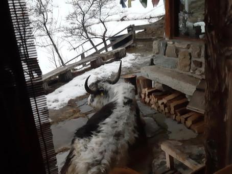 L'hiver avec Tsarang