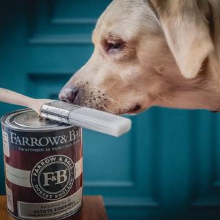 Labrador and Farrell & Ball paint