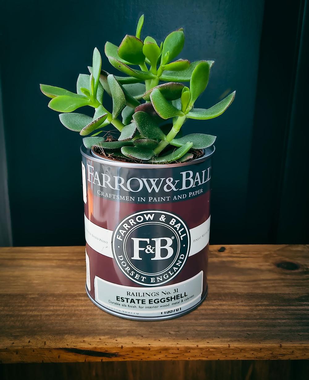 A green leafy plant in a Farrow & Ball paint tin