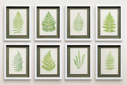Set of 8 framed 19th century fern prints