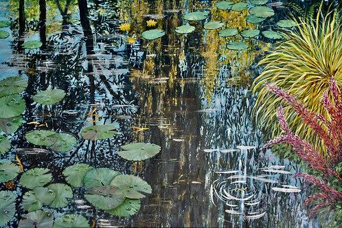 Sky below water lilies