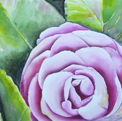 #140 Camilia Rose