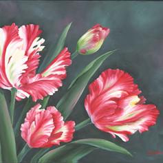 #2 Parrot Tulips