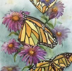 #138 Monarch #2