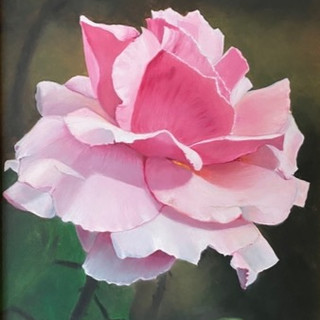 Fading Beauty Pink Rose