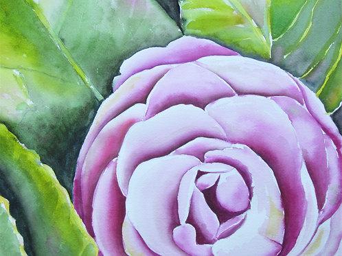 Camilia Rose