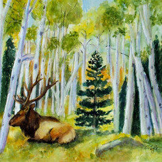 #145 Elk in the Aspens