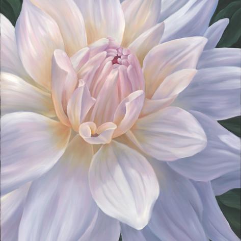 #1 White Dahlia