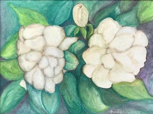 Trois Gardenias