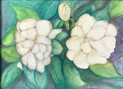 #156 Trois Gardenias