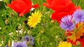 Wildflower Annual Pollinator Mix