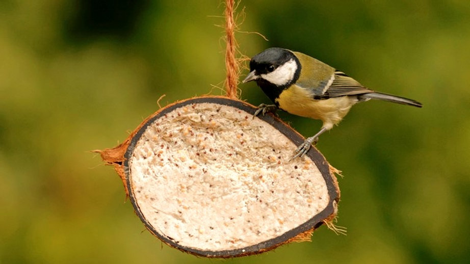 Coconut Bird Fat Feeder