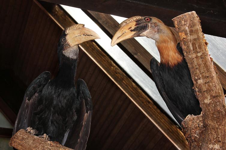 Dead Birds Talk, 2016