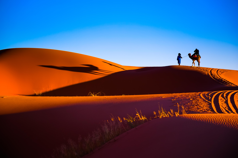 Desert & Camel