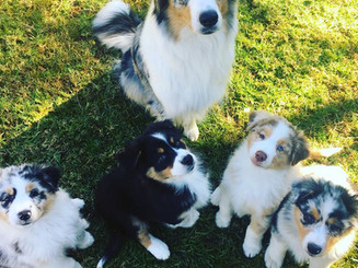 Evie & puppies