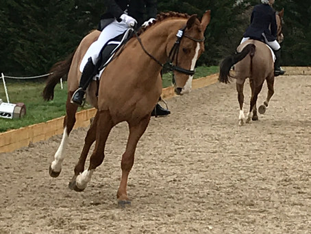 BRC Winter Dressage Qualifiers - Team Manager's Report