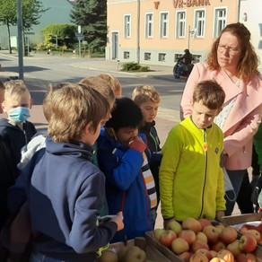 Sachunterricht: Obst und Gemüse aus unserer Region