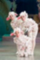 Eve-marie moutons.jpg