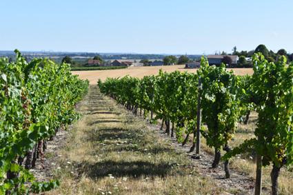 vignes-saint-pourcain-aout-2020