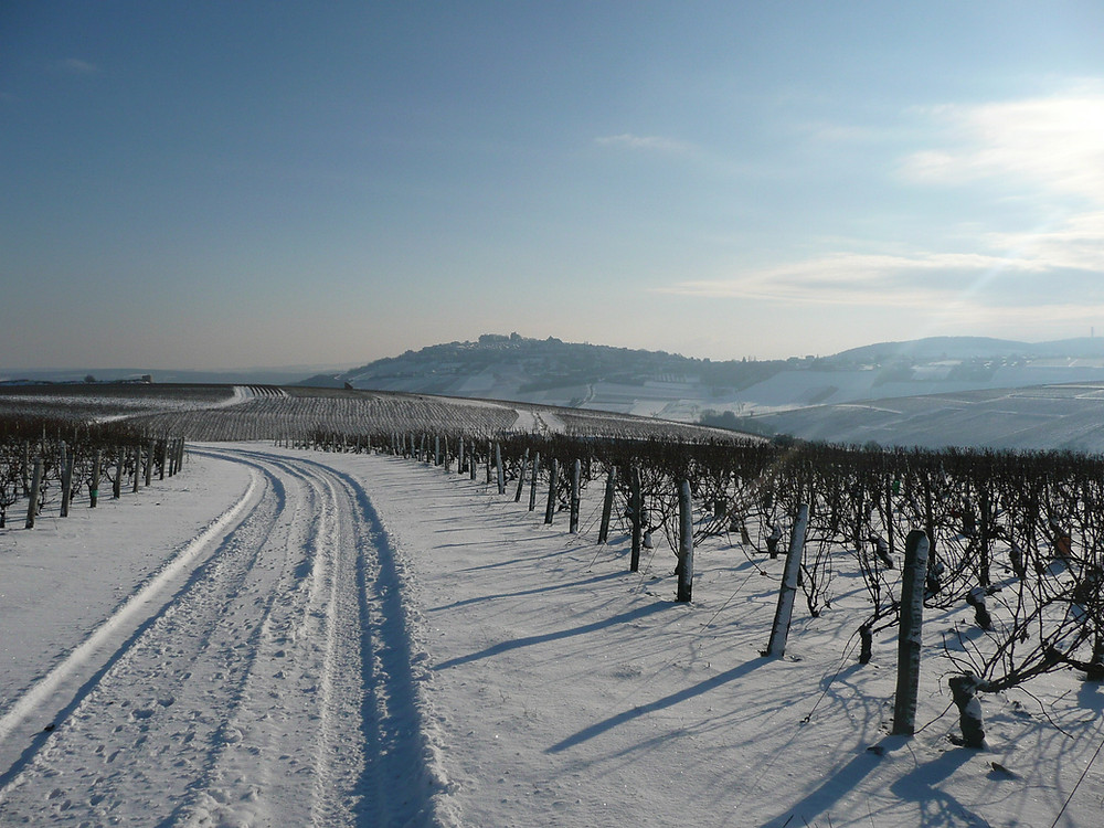 Vineyards-sancerre-snow