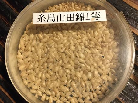 Nihon shu ou le saké japonais : les premières bases