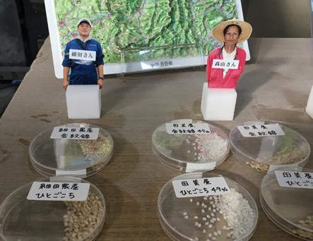 Aux racines du saké : le riz