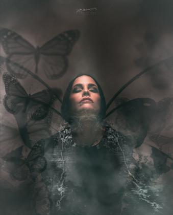 Butterfly N°3