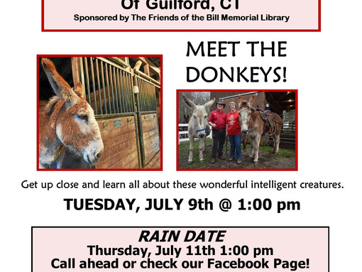 Meet the Donkeys of Tripledale Farm!