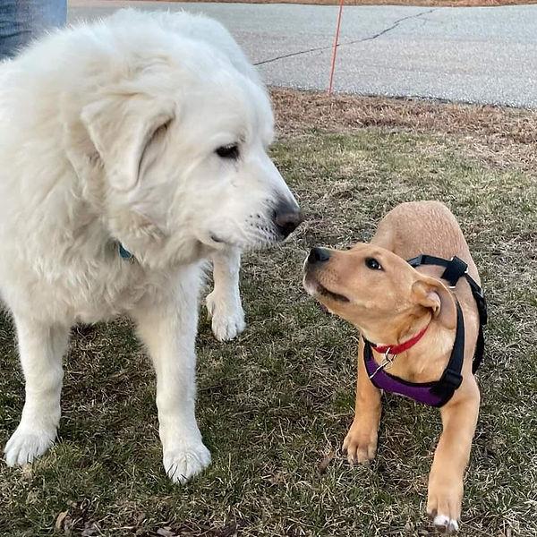 Clancy making a new friend.jpg