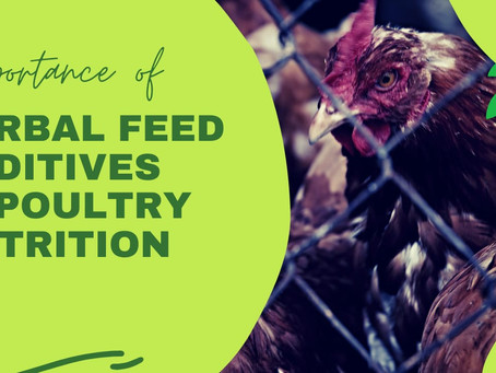 IMPORTANCE OF HERBAL FEED ADDITIVES IN POULTRY NUTRITION