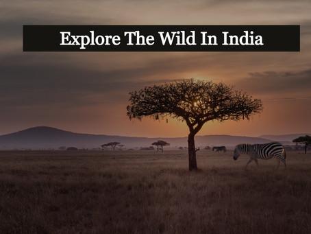 Explore The Wild In India