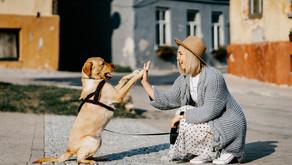 Dog Film Festival, la rassegna su videomaker, scrittori e amanti dei cani