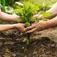 Partenariato, PSN e la nuova strategia nazionale per il settore agricolo