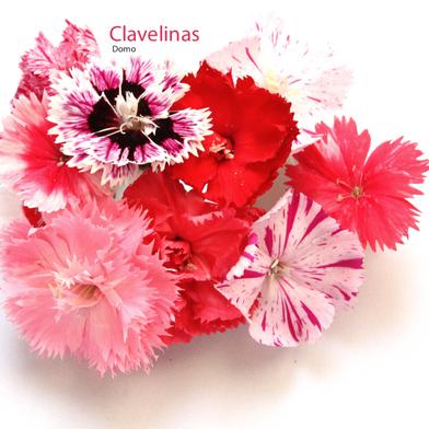 Clavelinas