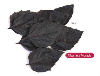 Albahaca Morada