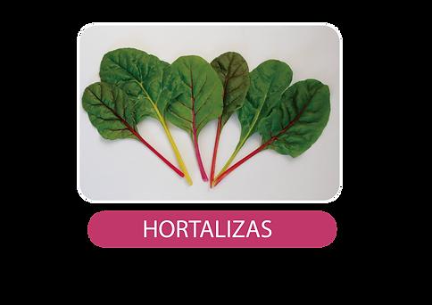 HORTALIZAS_Mesa de trabajo 1.png