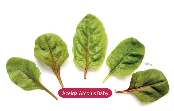 Acelga Arcoiris Baby