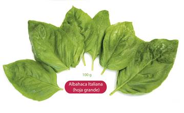 Albahaca Italiana