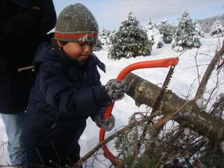 Taking down a Christmas tree