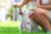 cbd-oil-for-dogs-the-ultimate-guide-4.jp