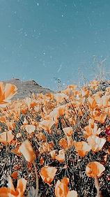 mountian flowers.jpg