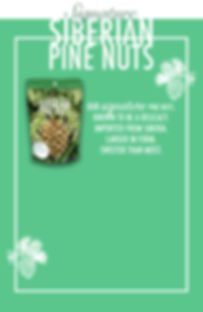 pinenutsflyer-front-draft.jpg