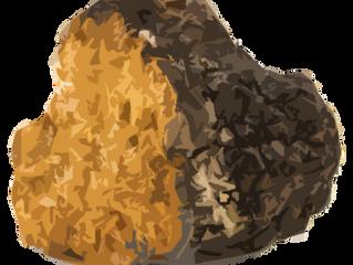 Are Chaga Mushrooms Actually Anti-Aging and Healing?  by Vikiia Nordic Labs