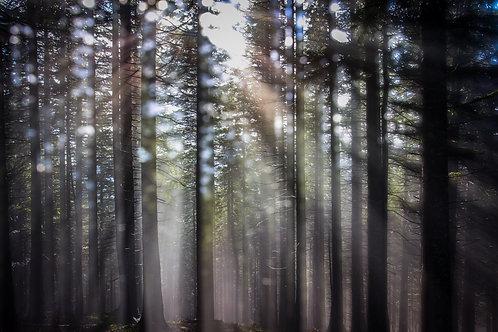 Kata Komuves: Forest in Light