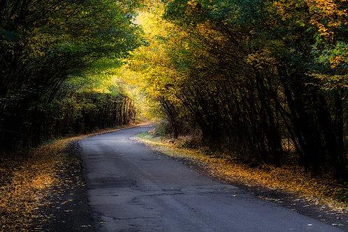 Gábor Ösz: Autumn
