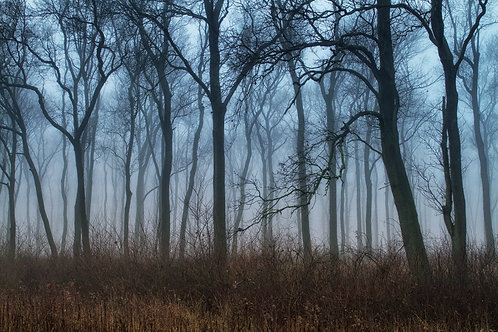Gábor Ösz: Foggy Forest