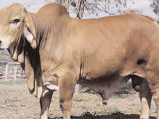Sire - Fairy Springs Beaumont 2070