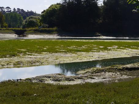 Bretagne: Die Algenplage und die Touristen