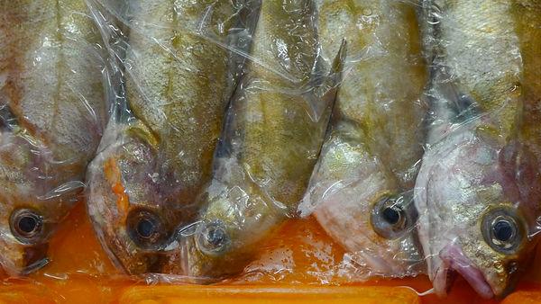 Fischfang Le Guilvinec Bretagne.JPG