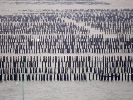 Große Klappe, viel dahinter – Die bretonischen Muschelbauern sind zufrieden